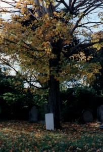 Gazzana tree